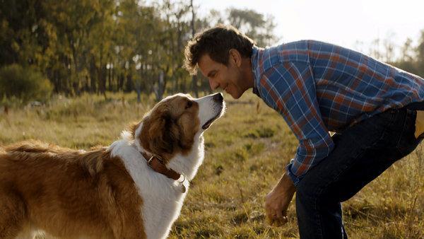 dogsjourney1-articleLarge-v2